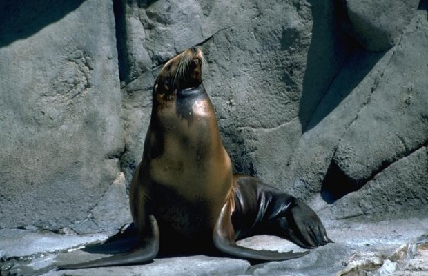 Abs of Seal!  {VIDEO}